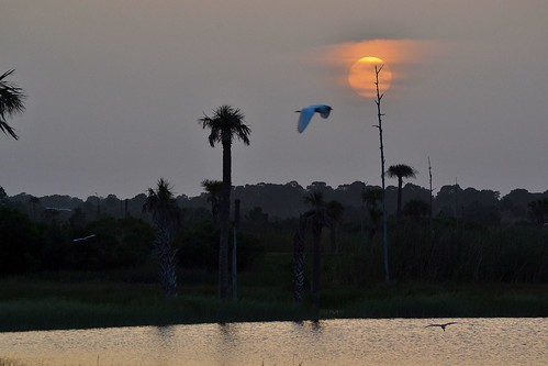 sunset sky sun water birds thegalaxy