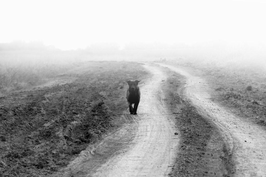 Aparición De Un Amigo En El Medio Del Camino Camino Hacia Flickr
