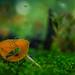 Araña lince verde / Green lynx spider por s7r4n9e1e7