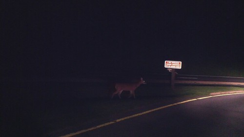Deer on Skyline Drive