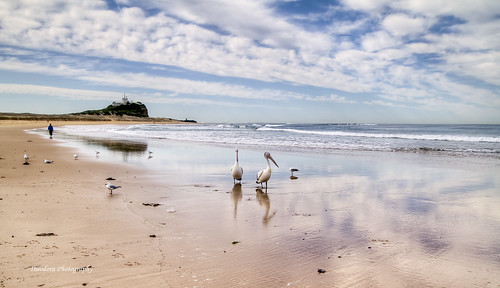sky seagulls beach pelicans clouds newcastle sand hdr nobbys sigma1020 nd8 canon7d theodoraphotography
