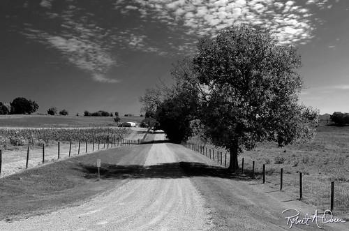 road-tree-bw | by raowen