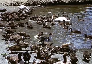 overpopulated pond
