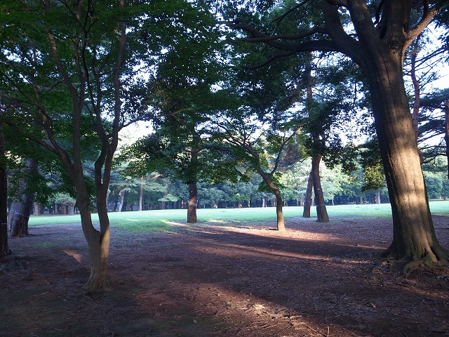 <p>b)大きな木々と広い芝生。森林浴もできます。</p>