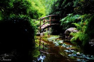 Bridge at Isamu Taniguchi Japanese Garden | by rubengarciajrphotography