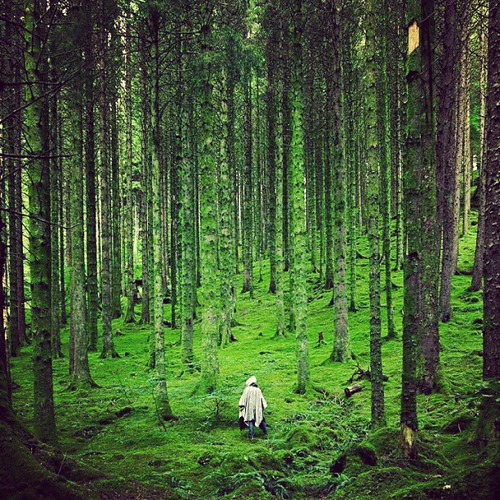 Always walking alone in the forrest. | by Takeshi Life Goes On