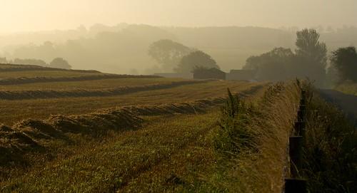 morning trees mist barn lane fields buckingham