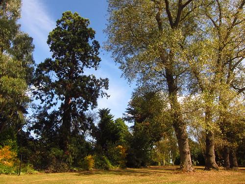 Beale Arboretum | by Laura Nolte