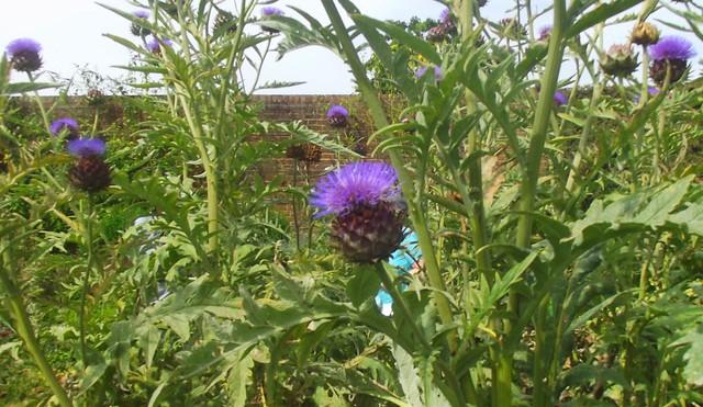 Wakehurst Place - Walled Garden