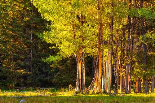 ranch light mountain nature colors forest colours plateau natureza marching aspens anarchist hdr osoyoos simmering quakingaspen janusz leszczynski tremblingaspen 001722 8222012 bewiahn