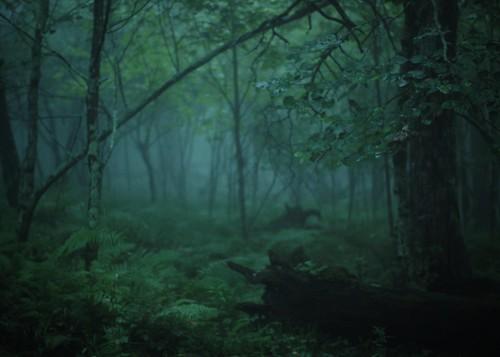 amybuxton blueridgemountains mountainlake fog trees woods forest foliage wilderness va virginia mountain green branches