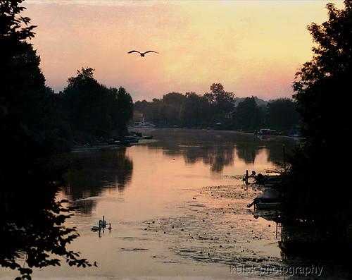 morning holland bird water nederland thenetherlands swans polder vogel ochtend zuidholland rivier zwanen alblasserdam tatot magicunicornverybest magicunicornmasterpiece