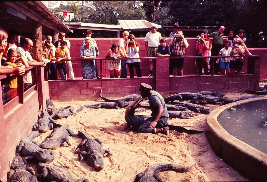 Florida   -   St. Augustine   -   Alligator Farm   -   January 1973