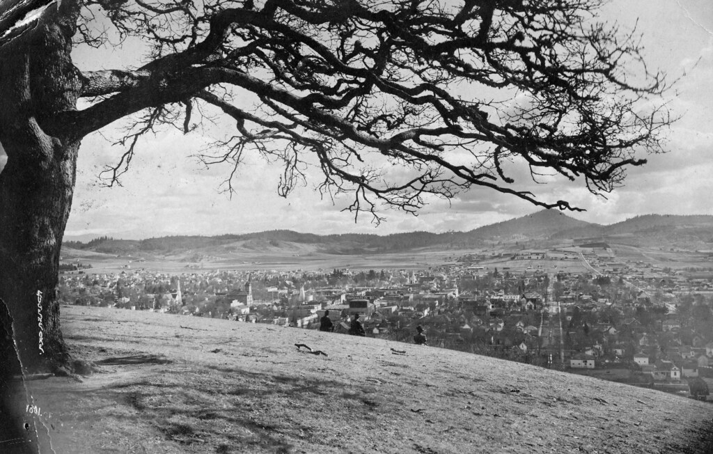 Eugene looking south from Skinner's Butte, tree, circa 1908