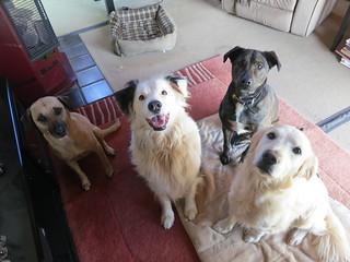 Doggie daycare   by Rayya The Vet