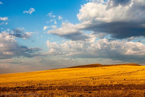 blue sky clouds sunrise golden amber washington hill grain september crop fields prosser 2012 stubble harvested culinaryfool 2470mm28 brendajpederson