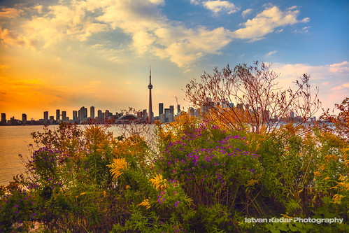 city autumn sunset urban lake toronto ontario canada flower building fall skyline architecture skyscraper landscape cityscape cntower vibrant september highrise skydome colourful