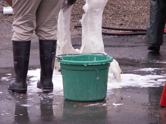 horse bucket