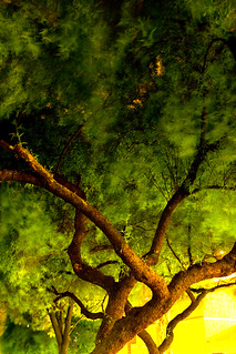 Feathered Tree | by thorinside