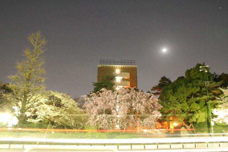 Sakura in Kunitachi