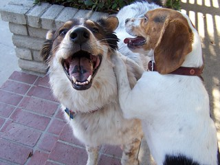 Two Happy Dogs | by Rick O!