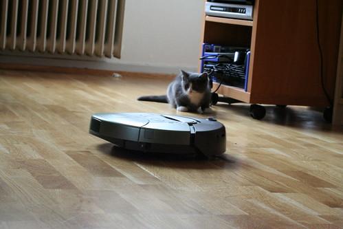 Linus stalking the Roomba | by Eirik Newth