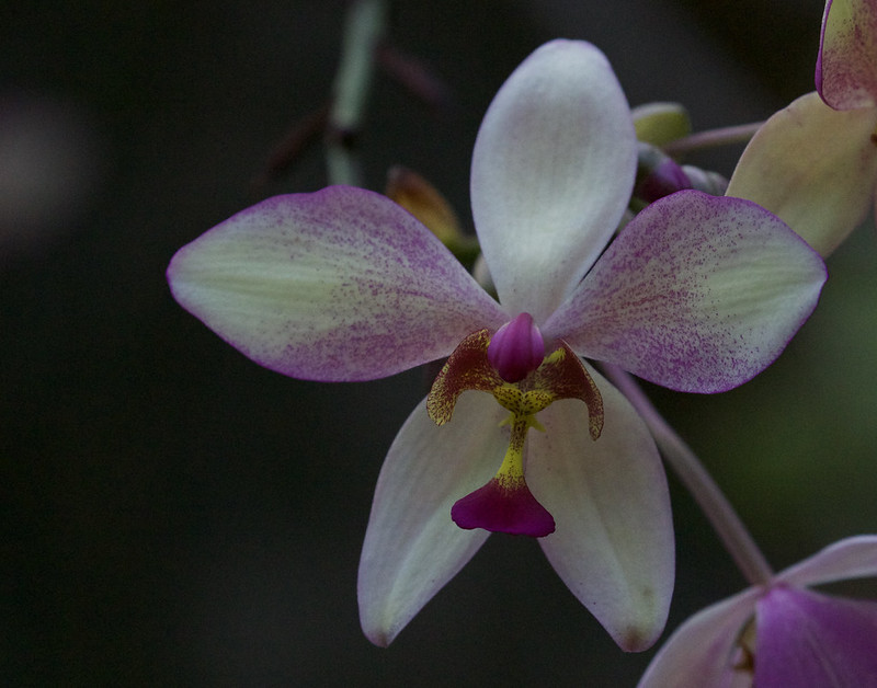 Orchid_199A3796