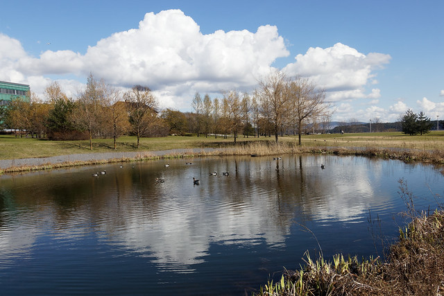 Small lake (Mirror)