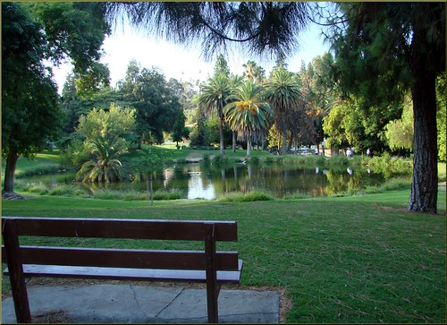 trees water grass palms landscape island ponds redlandsca waterreflection fordpark dgrahamphoto