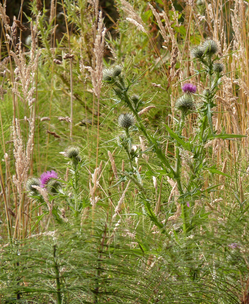 Thistles | Although the definition of Ethereal is ...