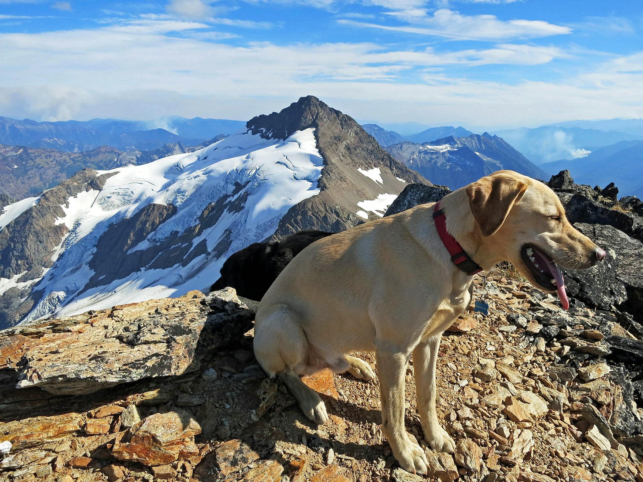 Summit dogs on Luahna Peak