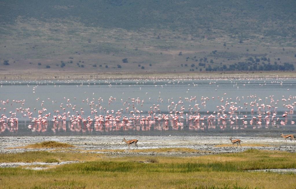 Ngorongoro Crater (1)