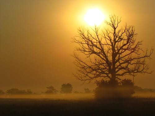 """morning trees orange nature fog wisconsin sunrise day oaks mukwonago flickraward"""""""