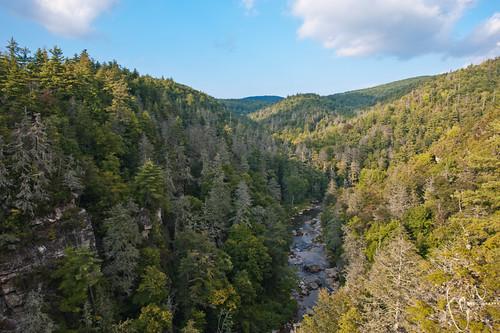 landscape nc high falls jungle blueridgeparkway linnville tonten