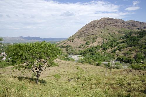 provincia paesaggi tolima colomba gualanday