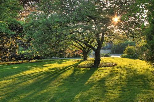 trees sunset sun ny garden rochester georgeeastmanhouse eastavenue