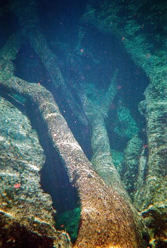 summer 35mm underwater florida springs