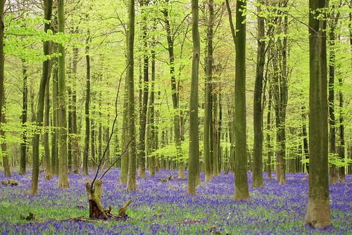 King's Wood, Kent, UK | by Rollofunk