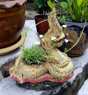 Naga chewing a plant | נאגה לועסת ענף | by Thai Food Blog