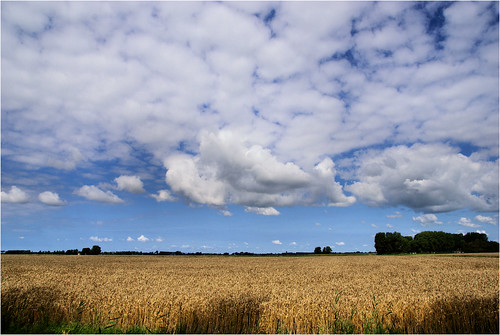 Fields of Gold | by Hindrik S