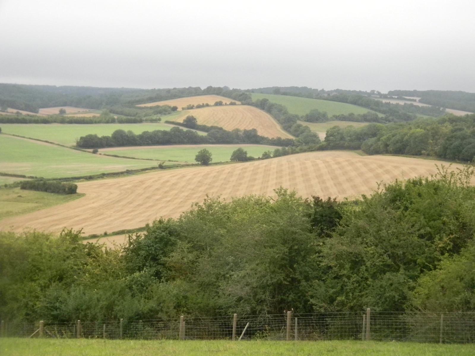 Herringbone field Henley via Stonor