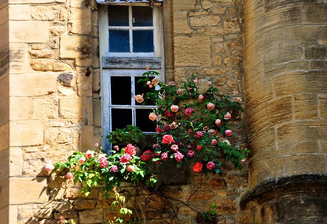 Roses de Sarlat
