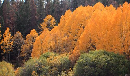 redfeathersandyellowleaves brownzelip