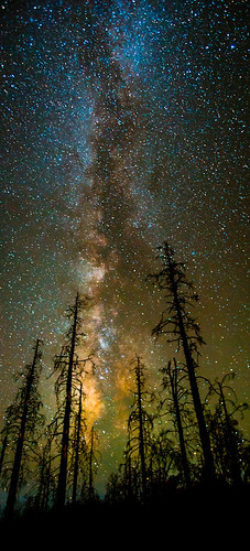 pictures california longexposure travel trees sky panorama santacruz northerncalifornia night canon stars landscape photography pano picture august best iso tall nightsky oranges davenport 2012 highiso verticle starrynight milkyway tobyharriman