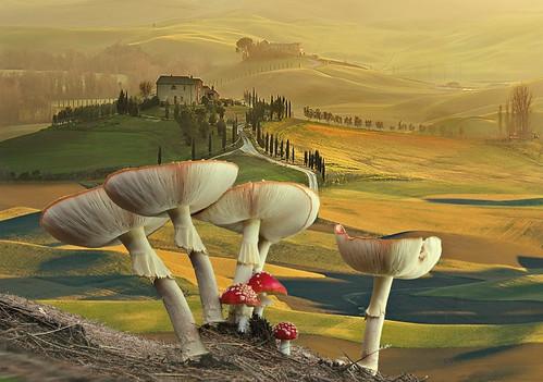 Amanite Toscana