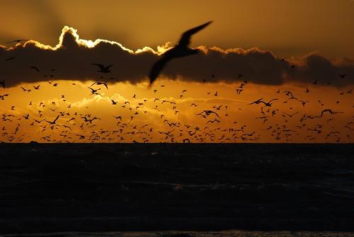 sunset birds oceanshores