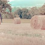 bale of straw - vintage look