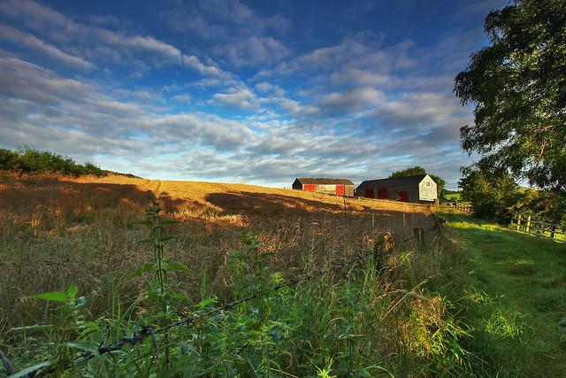 Wheat in the barn field (explored)