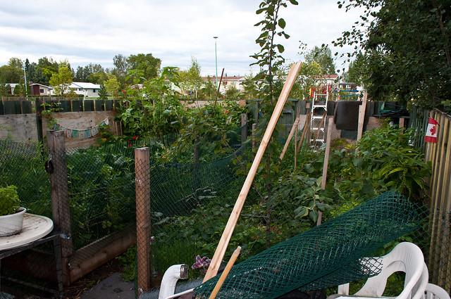 Garden 2012 10