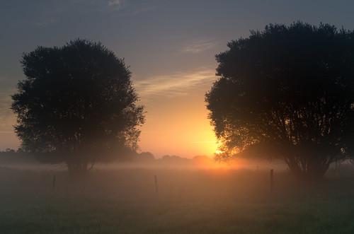 mist tree nature sunrise landscape sauce fences willow salix 31mm smcpentaxfa31mmf18allimited pentaxk5
